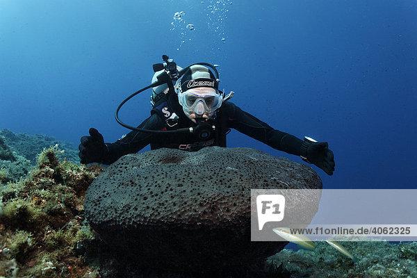 Taucherin misst Leder-Hornschwamm (Sarcotragus muscarum)  Meerjunker (Coris julis)  Paphos  Zypern  Asien  Mittelmeer