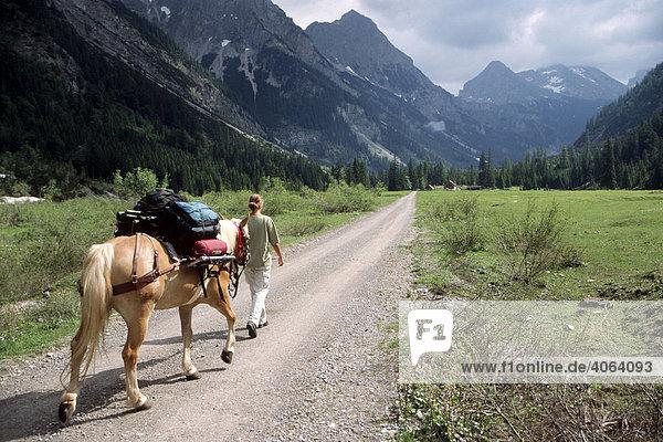 Trekking mit Haflinger durch das Karwendelgebirge  Naturfotografin bei der Arbeit  Nordtirol  Österreich  Europa