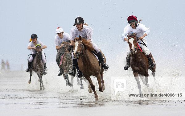 Reiter  Galopprennen  Duhner Wattrennen 2008  weltweit einziges Pferderennen auf dem Meeresgrund  Cuxhaven  Niedersachsen  Deutschland  Europa