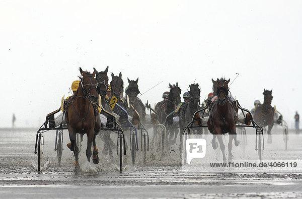 Trabrennen  Duhner Wattrennen 2008  weltweit einziges Pferderennen auf dem Meeresgrund  Cuxhaven  Niedersachsen  Deutschland  Europa