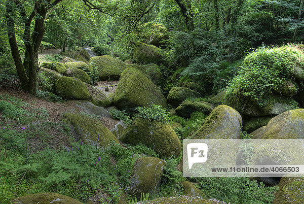 Granitfelsen im Forêt de Huelgoat  Bretagne  Frankreich  Europa