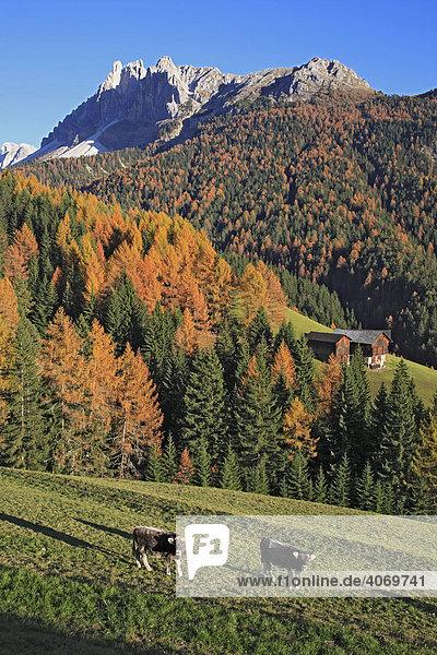 Würzjoch am Villnößtal  Südtirol  Italien  Europa