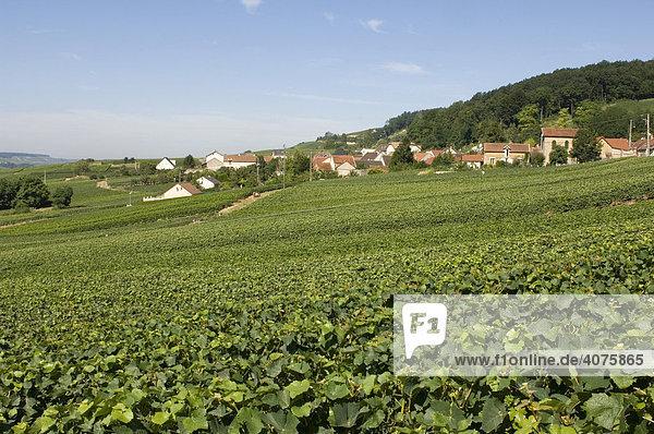 Häuser und Weinberge  Chatillon sur Marne  Champagne  Frankreich  Europa