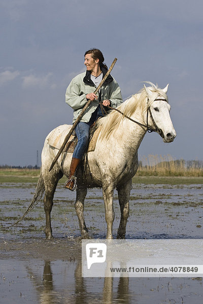 Guardian on Camargue horse  Camargue  Southern France  Europe