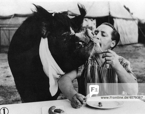 Mann füttert Schwein  historische Aufnahme  ca. 1920