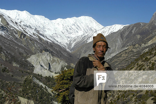 Mann schleppt Äste Tal des Khangsar Khola mit eisbedeckten Bergen Grand Barrier Annapurna Region Nepal