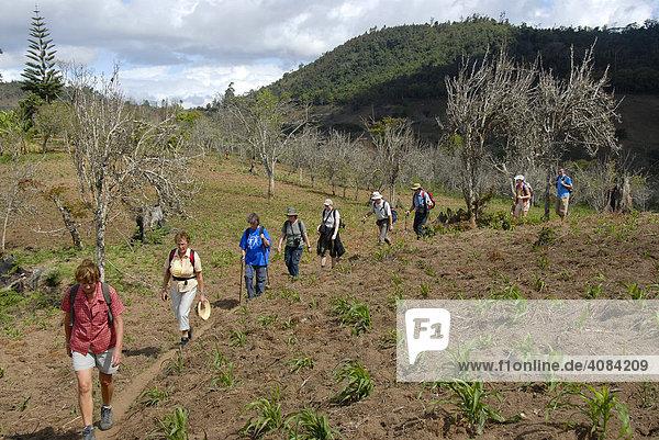 Group of hikers in the Usambara Mountains Tanzania