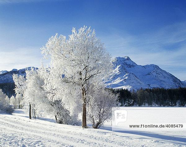 Engadin Switzerland hoar frost in winter time