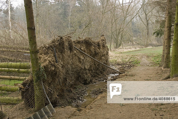 Fallen trees  roots covered with soil in an allotment garden  Waidhofen an der Thaya  Waldviertel  Lower Austria  Austria  Europe