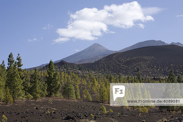 Pico del Teide  Teneriffa  Kanarische Inseln  Spanien