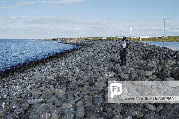 Weg über den steinigen Damm zum Vogelfelsen Halbinsel MelrakkaslÈtta Nordisland Island