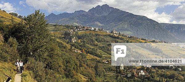 Von links der Algunder Waalweg dann Dorf Tirol darunter Brunnenburg und dahinter Ilfinger Spitze  bei Meran  Südtirol  Italien