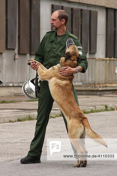Polizeihundeführer der Einsatzbereitschaft tätschelt seinen Polizeihund