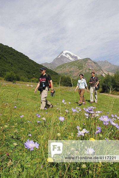 Trekkers in front of Kasbeg peak (5047 meters)  Kasbegi  Georgia
