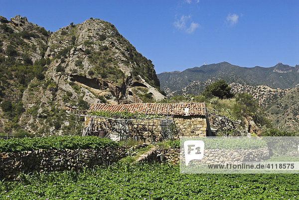 Altes Steinhaus bei Vallehermoso  Insel La Gomera  Kanarische Inseln  Spanien  Europa Insel La Gomera