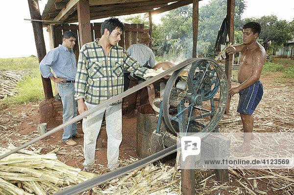 Farmhand processing sugar cane  Paraguay South America