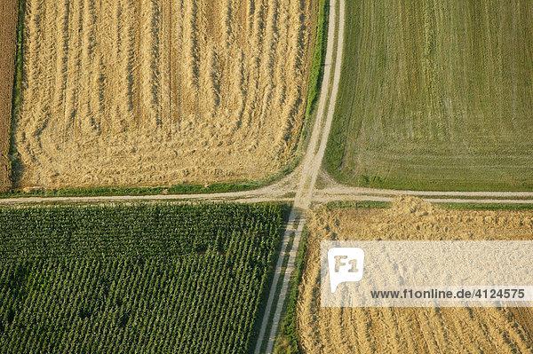 Landwirtschaftliche Wege grenzen verschiedene Felder ab  Bayern  Deutschland