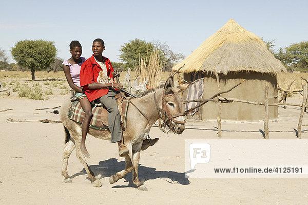 Jugendliche reiten auf einem Esel  Cattlepost Bothatoga  Botswana  Afrika