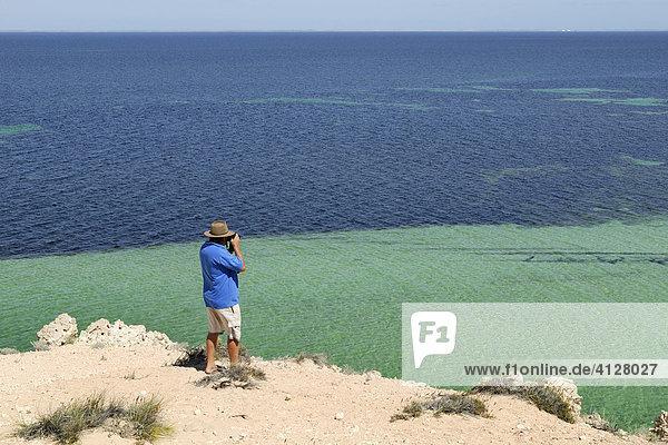 Blick auf die weltgrößten Seegrasbänke  Shark Bay World Heritage Area  Western Australia  Australien