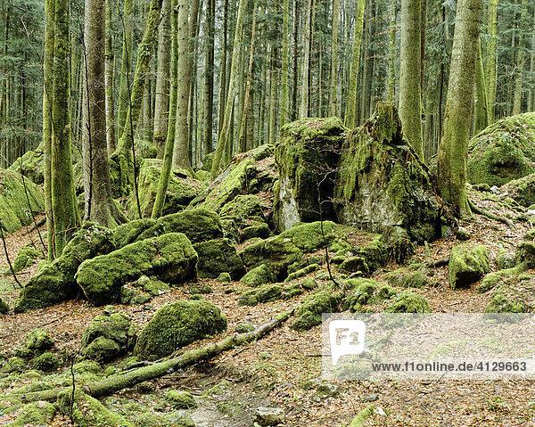 Forest  Brand near Ruhpolding  Chiemgau  Upper Bavaria  Germany