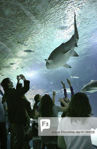 ESP  Spanien  Valencia: L'Ocenografic  Europas grösstes Aquarium  Ciudad de las Artes y de las Ciencias. Haie im Aquariumtunnel