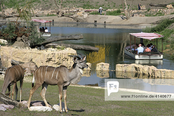 African Queen safari boat in the African habitat at ZOOM Erlebniswelt  modern zoo without traditional cages in Gelsenkirchen  North Rhine-Westphalia  Germany  Europe