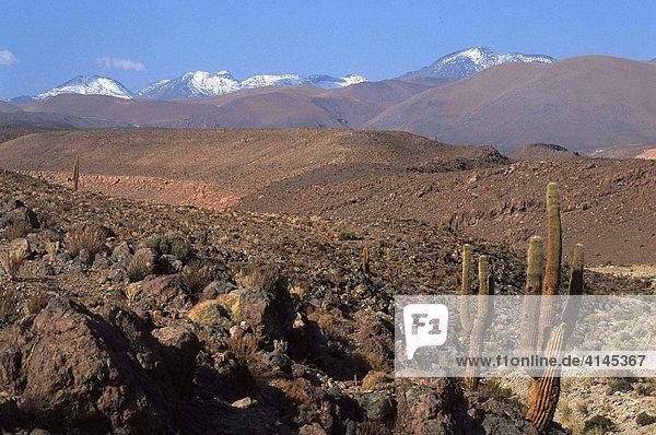CHL  Chile  Atacama-Wueste.