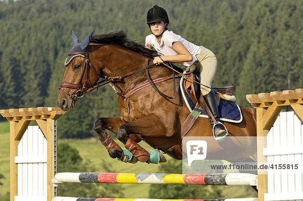 Jugendliche Reiterin beim Springen auf Bayerischem Warmblut
