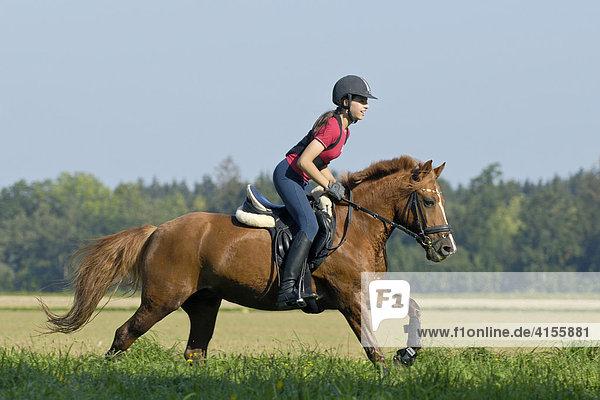 Jugendliche Reiterin mit Reithelm und Rückenprotektor im Galopp auf einem Deutschen Reitpony