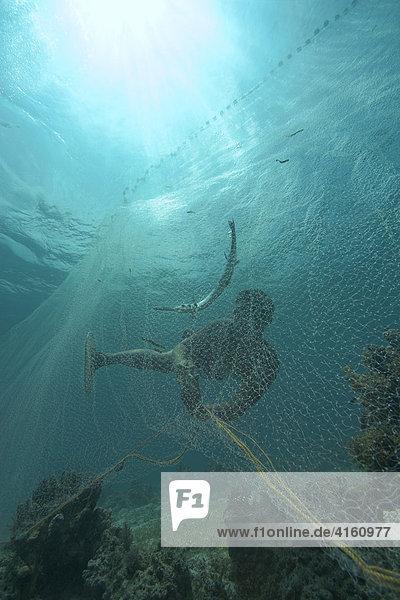 Fischer fangen mit einem Netz Hornhechte  Philippinen