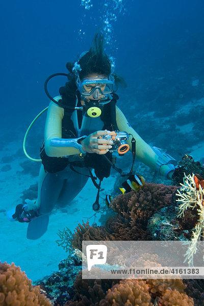 Taucherin mit einer Digital Unterwasserkamera fotografiert Anemonenfische.