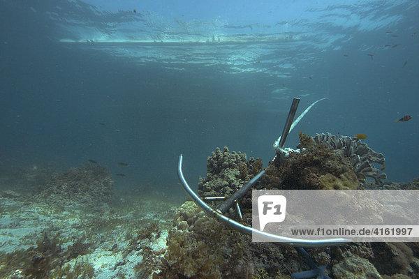 Anker auf dem Grund eines Korallenriffs  Asien  Philippinen.