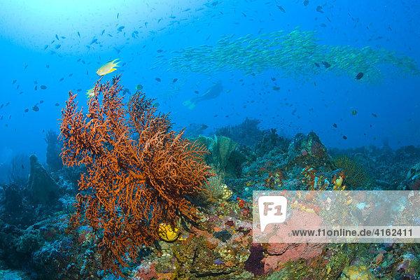 Korallenriff in Indonesien.