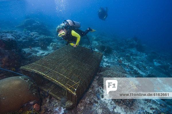 Taucher  eine einfache Fischreuse aus Bast und Bambus liegt auf dem Meeresboden  Indonesien.