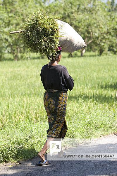 Frau trägt Gras in einem Sack auf dem Kopf  Insel Lombok  Kleine Sunda-Inseln  Indonesien