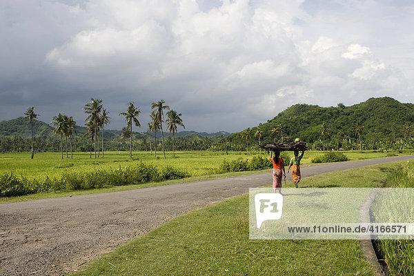 Bunt gekleidete Frauen tragen Reis auf Ihrem Kopf  hinten die Reisfelder  bei Biraq  Insel Lombok  Kleine-Sunda-Inseln  Indonesien