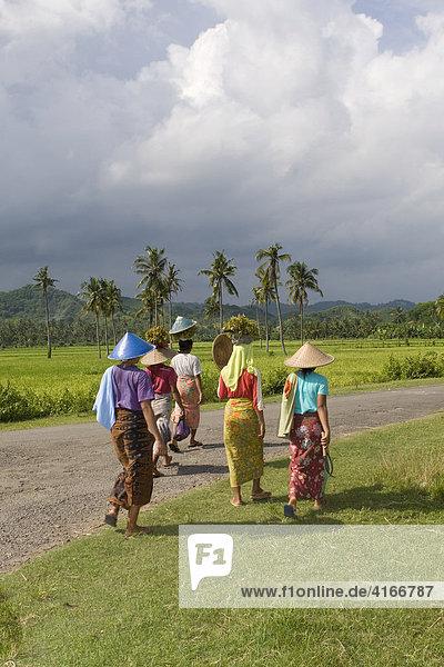 Frauen gehen nach der Arbeit zu ihrem Dorf  hinten ein Reisfeld mit Palmen  Insel Lombok  Kleine Sunda-Inseln  Indonesien  Asien