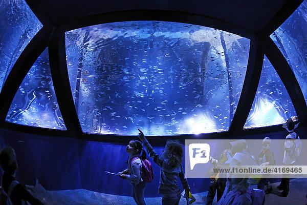 Sea Life München   Fischschwarm