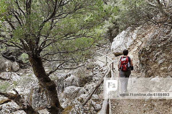 Wanderin in Rouvas-Schlucht (Rouwas) bei Zaros  Ida-Gebirge (Psiloritis)  Zentralkreta  Kreta  Griechenland