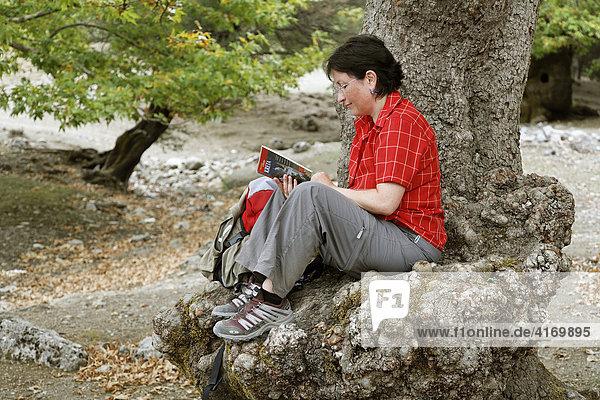 Wanderin liest Reiseführer auf Stamm von Platane (Platanus x acerifolia)  Ida-Gebirge (Psiloritis)  Zentralkreta  Kreta  Griechenland
