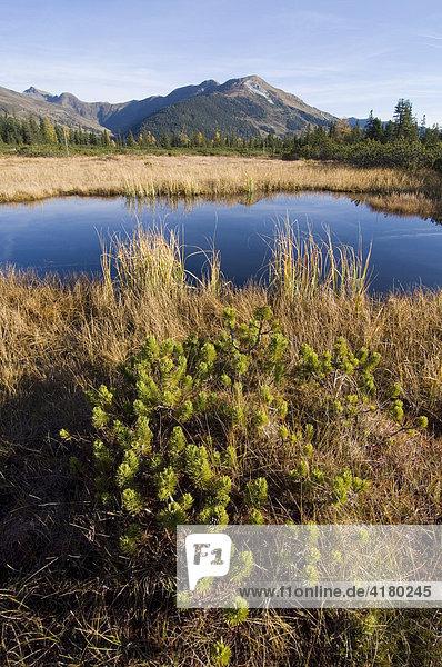 Moorsee in Sieben Mösern  Nordtirol  Österreich  Europa