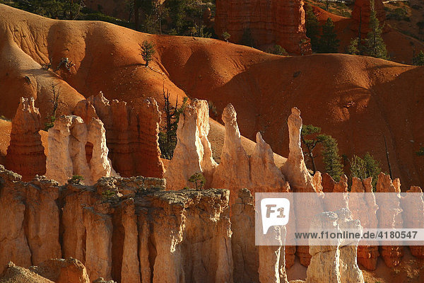 Bryce Canyon am Morgen Utah United States of America USA