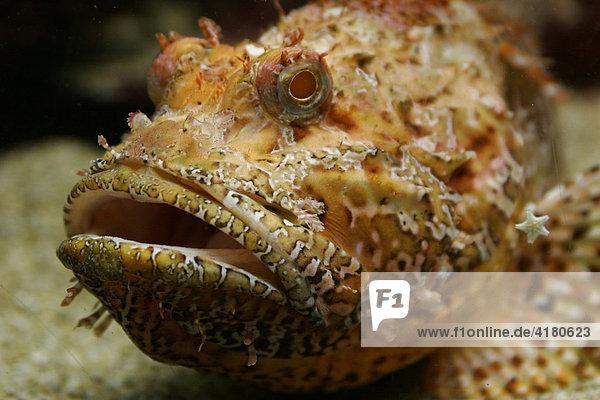 Fisch im Zee Aquarium Bergen an Zee  Niederlande