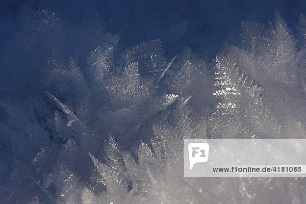Schneekristalle im Schwarzwald  Baden-Württemberg  Deutschland  Europa
