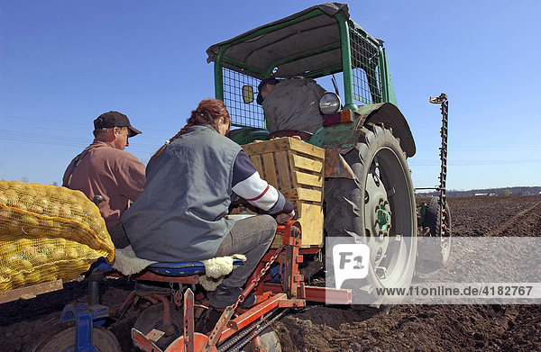 Kartoffeln liegen auf einer Maschine die von einem Traktor gezogen wird