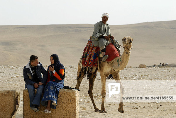 The pyramids in Gizeh. Lovers and dromedary Gizeh  Cairo  Egyt