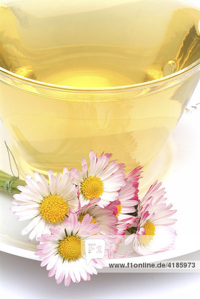 Tee aus Gänseblümchen  Massliebchen  Tausendschön  Bellis perennis  Gänseblümchentee