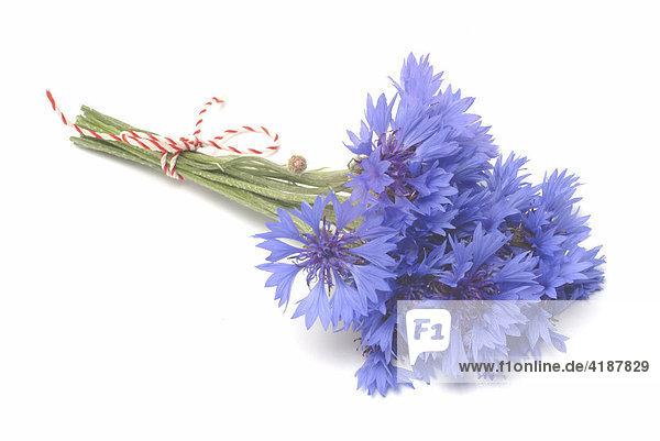 Heilpflanze Kornblume (Centaurea cyanus)