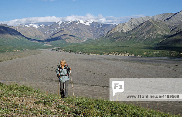 Wandern durch den Denali Nationalpark  hinten die Alaska Range  Alaska