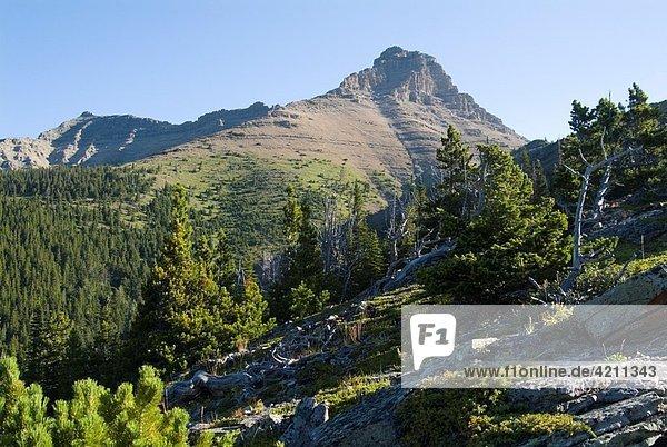 Mount Galwey in Waterton National Park  Alberta  Canada